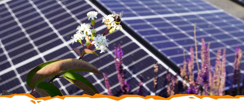Nachhaltigkeit - Unsere Verantwortung zum Schutz von Klima und Umwelt
