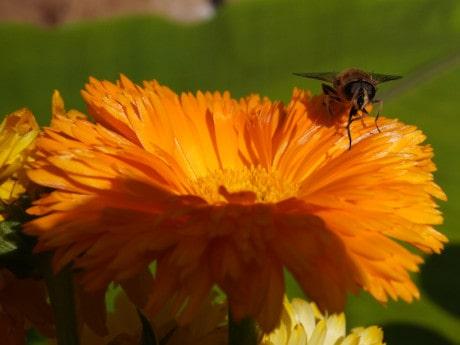 Bienen auf dem Firmengelände